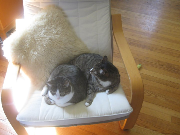 "Betty and Ruthie, sisters, mackerel tabby cats taking up a chair. Caption reads:  ""What? It's our chair."" ::shrug::"
